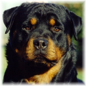 List of All Types Dogs Breed